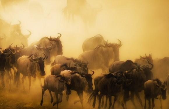 2019年7月肯尼亚动物大迁徙之旅(准备出发)
