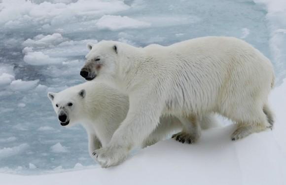 2019年8月北极熊王国斯瓦尔巴德群岛+冰岛(19天)