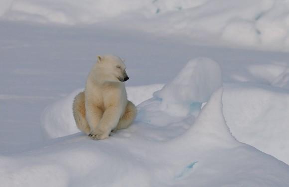 2019年8月北极熊王国斯瓦尔巴德+冰岛+格陵兰(24天)