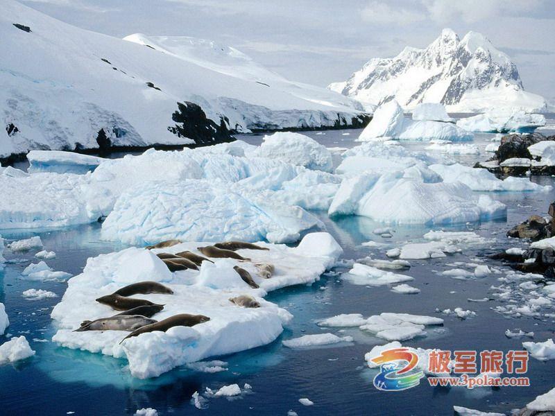 北戴河海之旅旅行社_2015年南极罗斯海深度探险之旅-广州极至国际旅行社