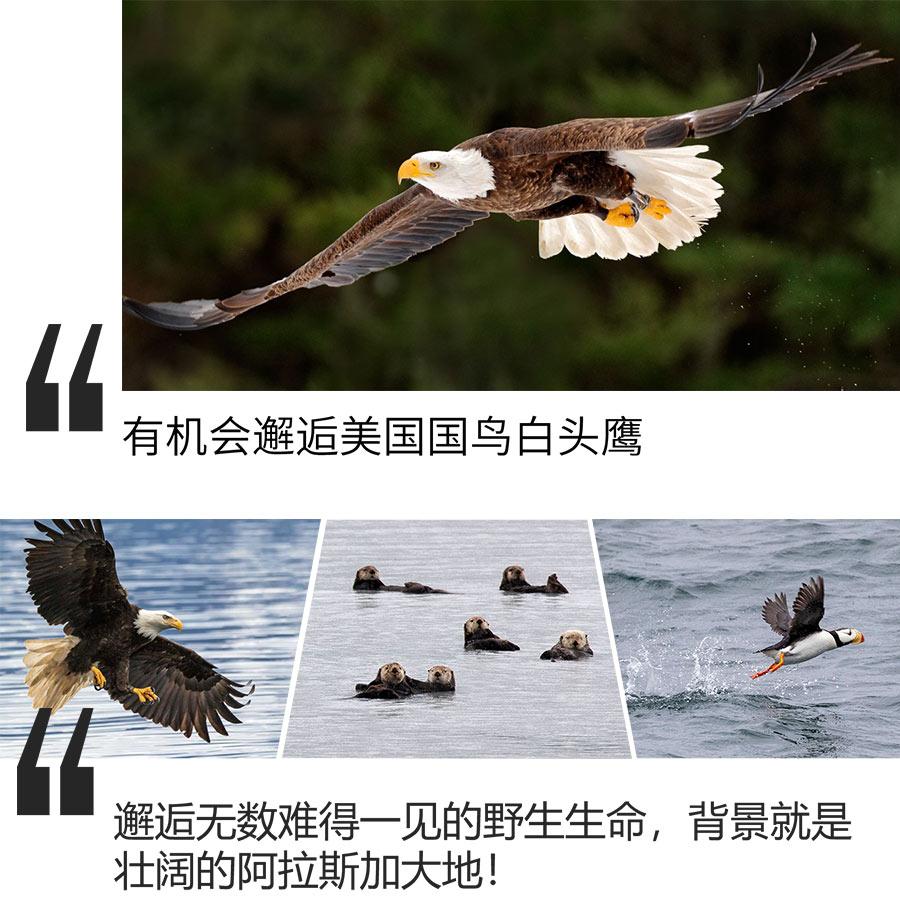 新版详情页竖版(dianshangban)_11.jpg